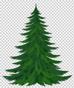 tree transparent pine