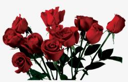 tumblr transparent rose