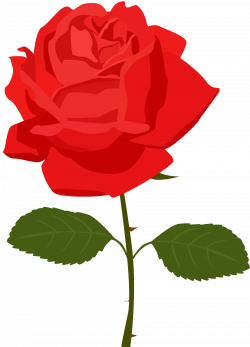 roses clipart clear background