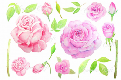 roses clipart watercolor