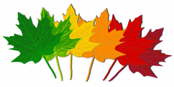 fall leaves clipart divider