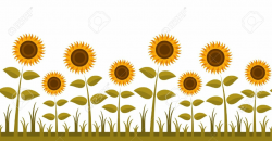 garden clipart sunflower