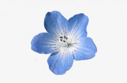 tumblr transparent blue