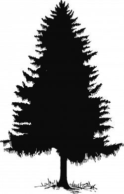 pine tree clipart drawn