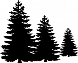 pine tree clipart vector