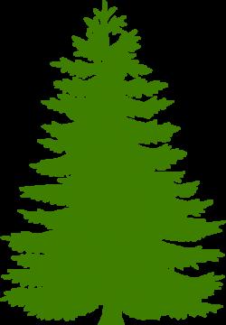 pine tree clip art cedar