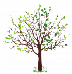 Tree clipart spring