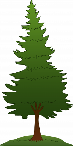 pine tree clipart illustration