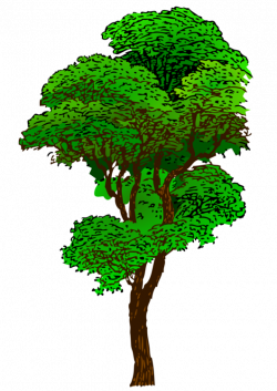 Nature clipart rain forest