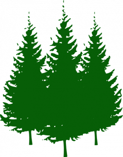 forest clipart pine tree