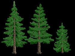 pine tree clip art transparent