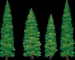 pine tree clip art skinny