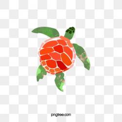 turtle logo transparent