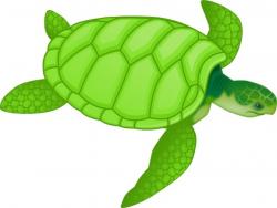 turtle clipart swimming