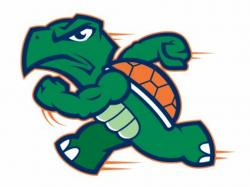 turtle logo team